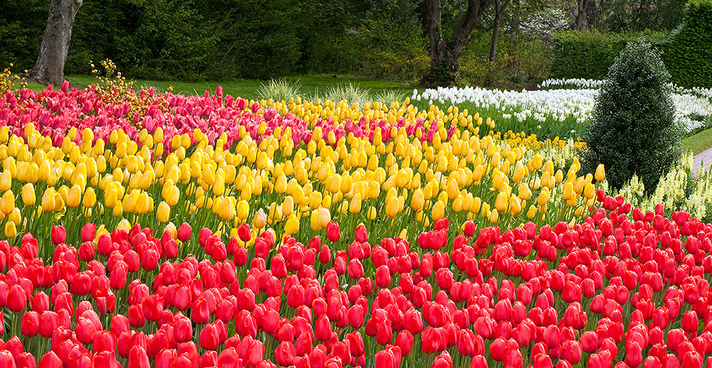 Spring Blooms At Longwood Gardens March 30 May 5 Pinpoint